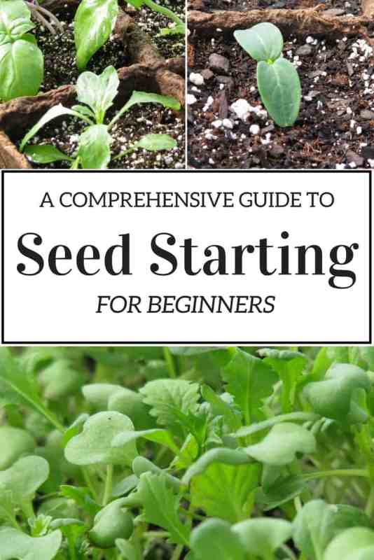 A comprehensive guide to seed starting for beginners