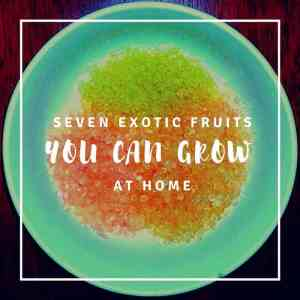 Exotic Fruits Grown in the USA