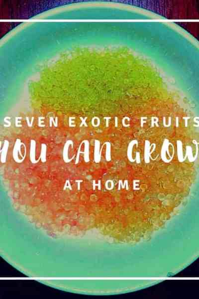 Seven exotic fruits you can grow at home