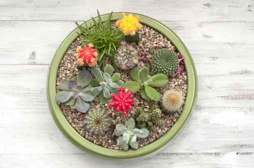Sell miniature succulent gardens to make money gardening from home.