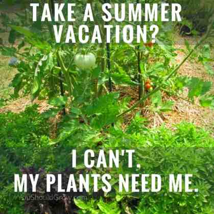 Take a summer vacation? I can't. My plants need me.
