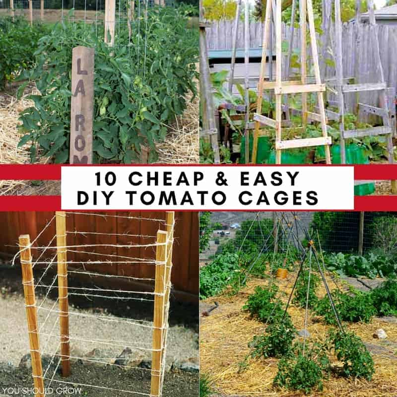 10 Ideas For Homemade Tomato Cages Cheap Easy You Should Grow