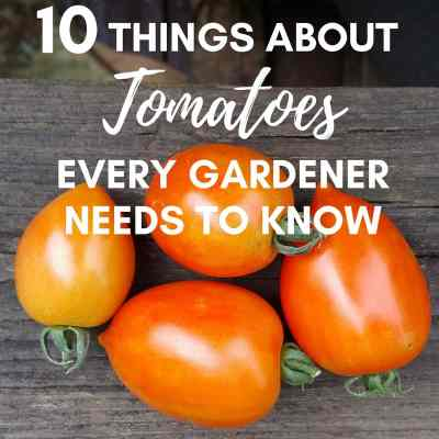 10 Things About Growing Tomatoes Every Gardener Needs To Know