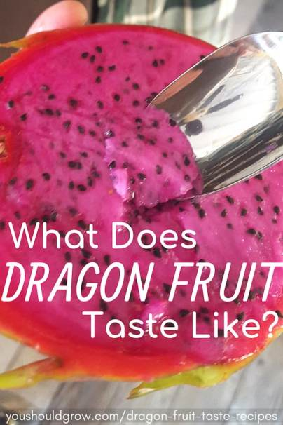 What does dragon fruit taste like? Click to find out!