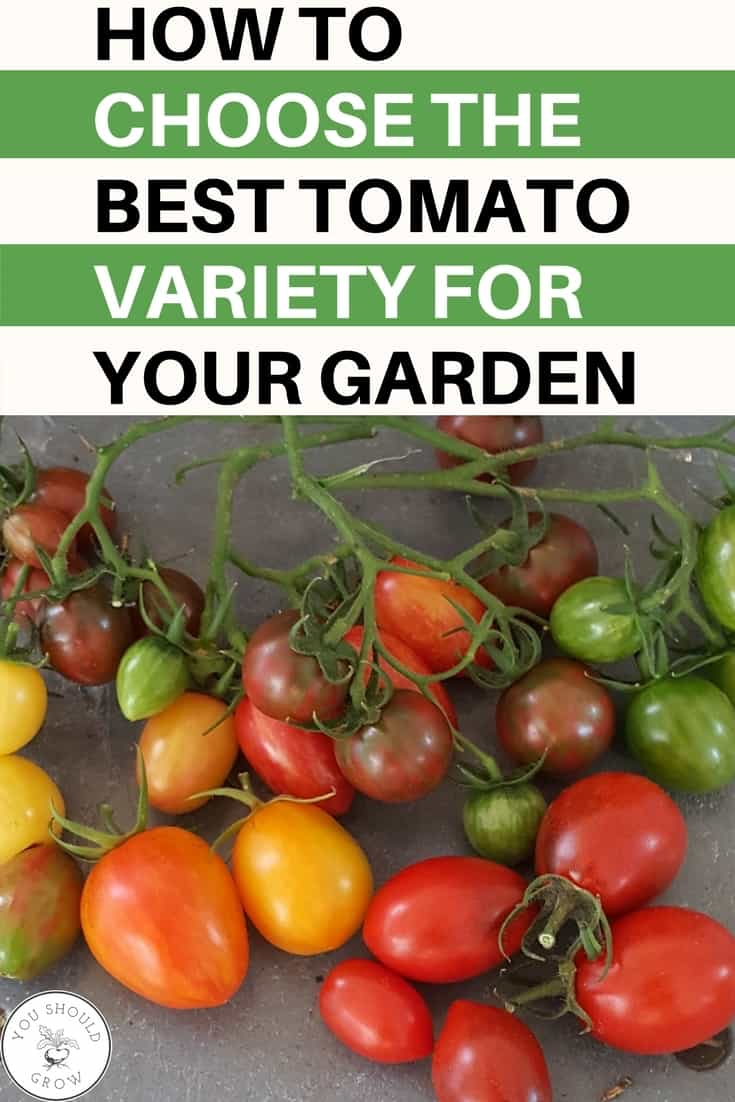 Growing tomatoes: this guide will help so much when you're trying to choose which tomato to grow! If you're overwhelmed with all the options in seed catalogs, you need to this post. It will help you narrow down your choices so you choose the tomato that grows best in YOUR garden! Gardening For Beginners   Backyard Vegetable Garden   Gardening Tips