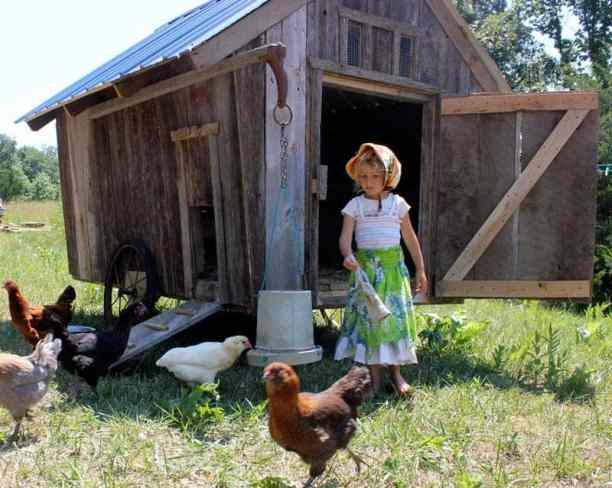 mobile chicken coop by homestead honey