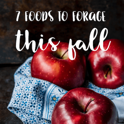 foraging for food in the fall feature