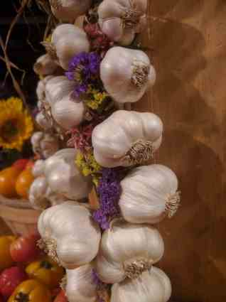 Braid your garlic to really stand out at market and make more sales!