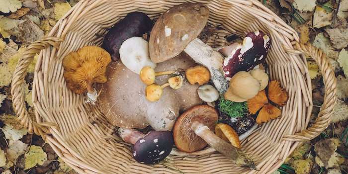 Basket of assorted mushrooms