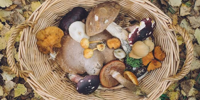 Basket of assorted mushrooms
