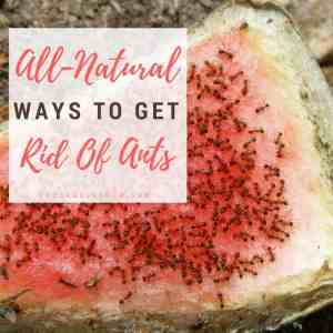 57 All Natural Ways To Get Rid Of Ants