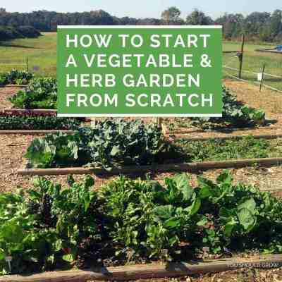 How To Start A Vegetable And Herb Garden From Scratch