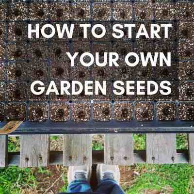 Starting Your Vegetable Garden: The Best Way To Germinate Seeds