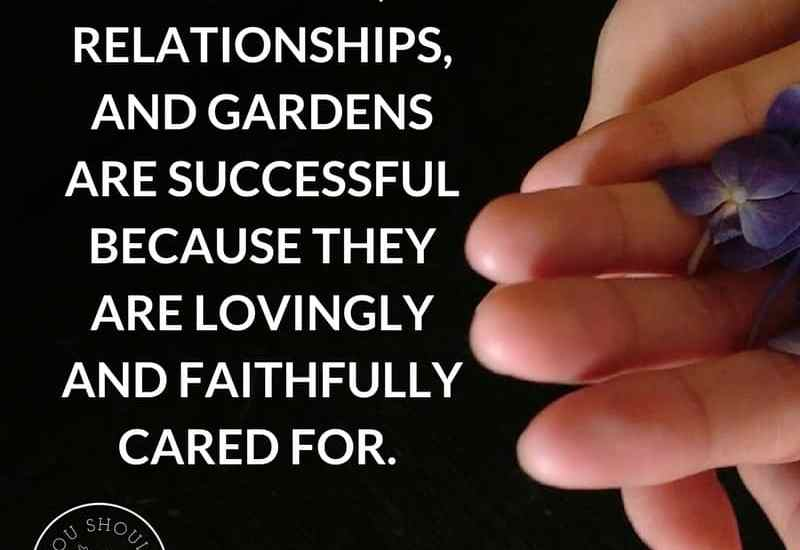 How to have a successful garden.