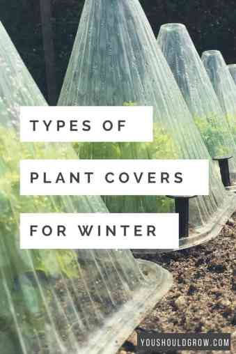 When frost is looming in your forecast, you need to act fast to protect your plants from freezing temps. Learn about the types of plant covers for winter.