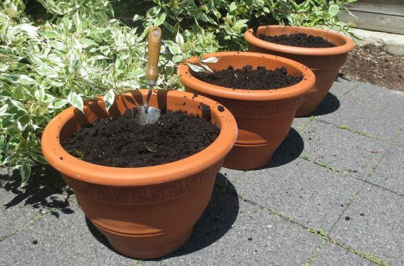 Grow vegetables in containers with these 5 tips