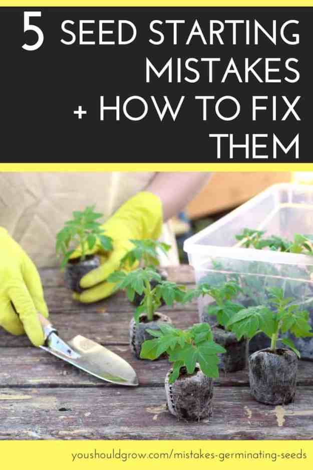 text: 5 seed starting mistakes + how to fix them below text image of tomato seedlings in peat pots on a table with hands in yellow gloves holding garden spade.