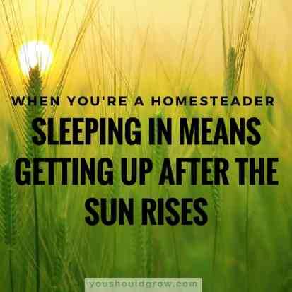 Homestead life means rising with the sun.