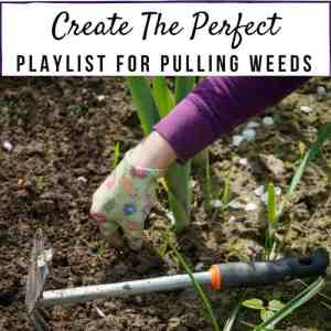 Create The Perfect Song Playlist For Pulling Weeds