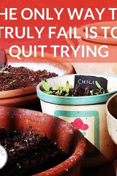 """Garden pots with seedlings sprouting and text overlay: """"The only way to truly fail is to quit trying"""""""
