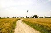Through the fields