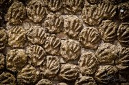 Cow-dung patties; made by hand and used as fuel