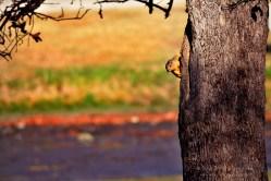 Peek-a-boo squirrel.