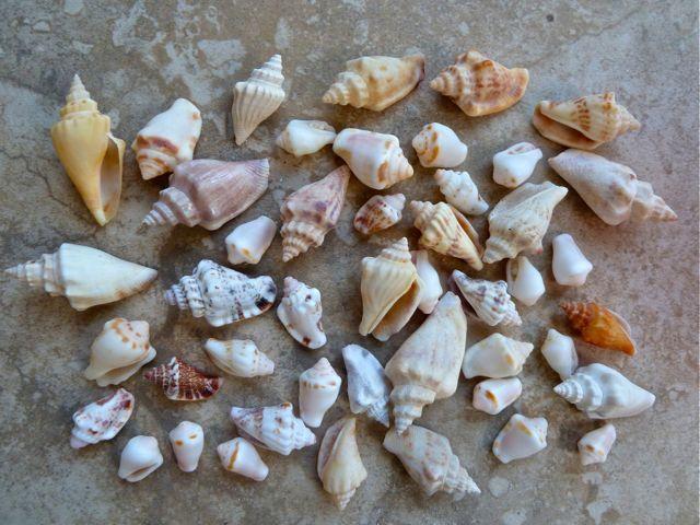 white shells andaman
