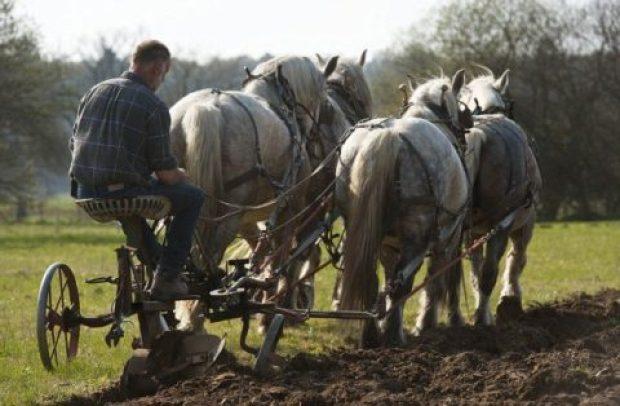 صورة لمزارع يمتطي أحصنته