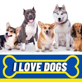 dogs day brazil