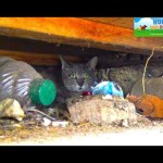 Mama cat wouldn't leave her babies behind.  She took one, came back for the rest, and then…