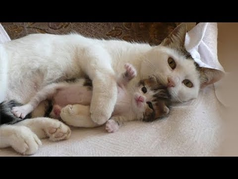Mother Cats taking care and Protecting their cute Kittens safety – Mom cat and Kitten Compilation