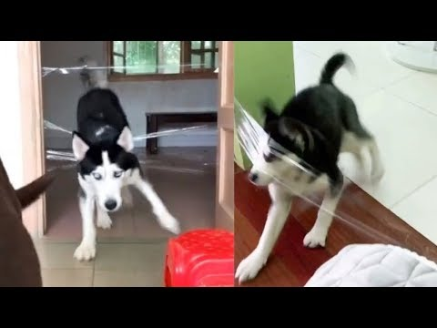Testing Dog or Cat Intelligence with Clear Tape | Funny Dogs and Cats Reaction to Clear Tape