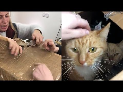 11 Cats Dumped in the Night…