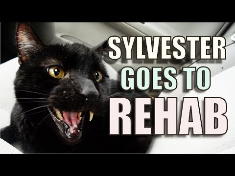 Talking Kitty Cat – Sylvester Goes To Rehab