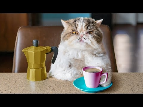 Catfinated – When Cats Drink Coffee