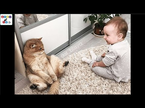 A cute baby and a cat – A baby and a cat play extremely funny