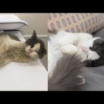 Street Cat Rescue: Before and After