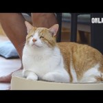 세상에서 가장 특별한 눈을 가진 고양이 ㅣ This Cat Has Never Seen The World Since Birth, But..
