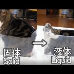 液体化するねこ。-Maru becomes liquid.-