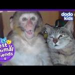 Billo The Cat Is Best Friends With A Monkey Named Avni | Dodo Kids: Best Animal Friends