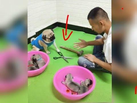 面白い犬と猫のビデオを見ているときは笑わないでください。 2019年の面白い動物 #491