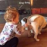 「面白い動物」あり得ないことをする犬, 猫・おもしろ犬, 猫のハプニング, 失敗集 #507