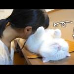 洗いたてのふわっふわの猫まくらが気持ちよすぎました!