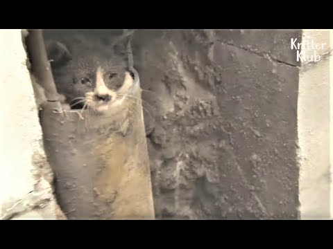 Cat Calls People To The Wall To Save His Kitten Friend Stuck Inside Of It | Kritter Klub