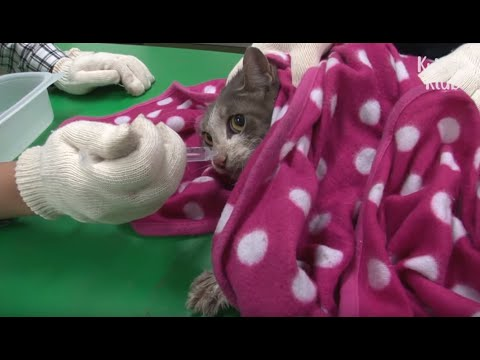 Pregnant Cat Couldn't Give Up Her Kittens Even When Stranded On The Roof | Animal in Crisis EP89