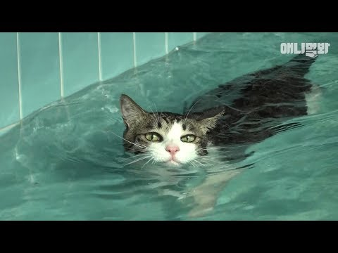 우리집 고양이가 얘 보더니 고양이 아니다에 츄르 가진거 다 건대요 ㅣ Swimming Phelps Cat *LIT*