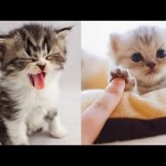 💗Aww – Funny and Cute Dog and Cat Compilation 2019💗 #29 – CuteVN