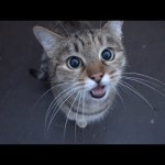 cute cat is saying something to me