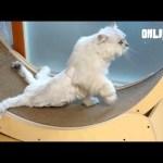세상에서 가장 행복한 두 다리 고양이 ㅣ Cat Is Happy Even Though He Can't Use His Hind Legs